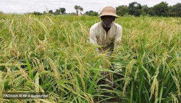 Fadama farming